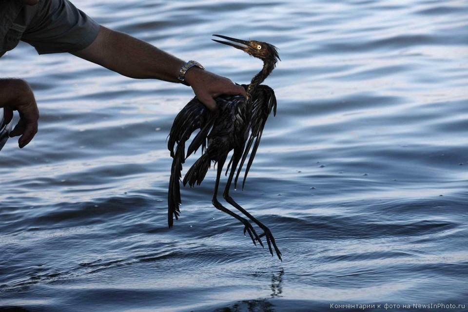 Последствия-разлива-нефти-BP-в-Мексиканском-заливе-по-прошествии-года-31-960x640