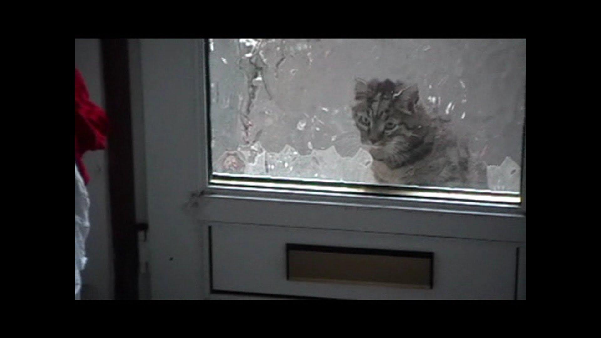 кошка за дверью