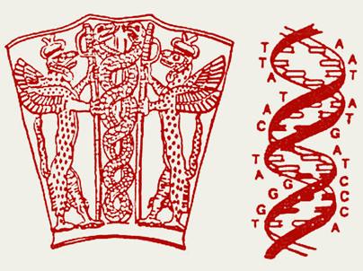 кадуцей и двойная спираль ДНК