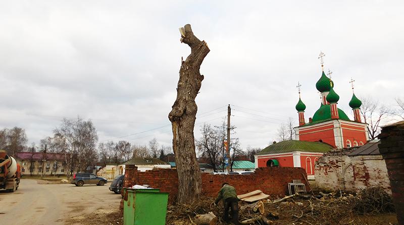 обрезанное дерево
