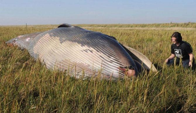 кит 1