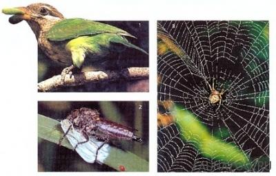 враги бабочек