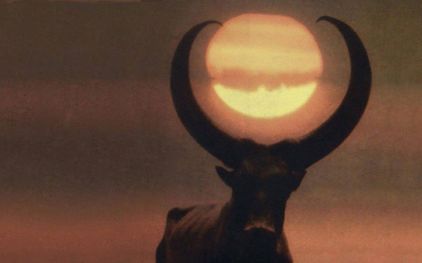 бык-луна