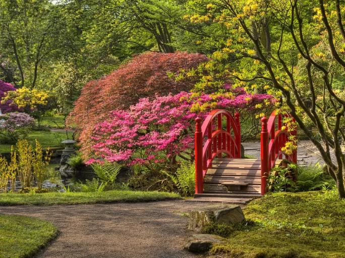 Спирея японская