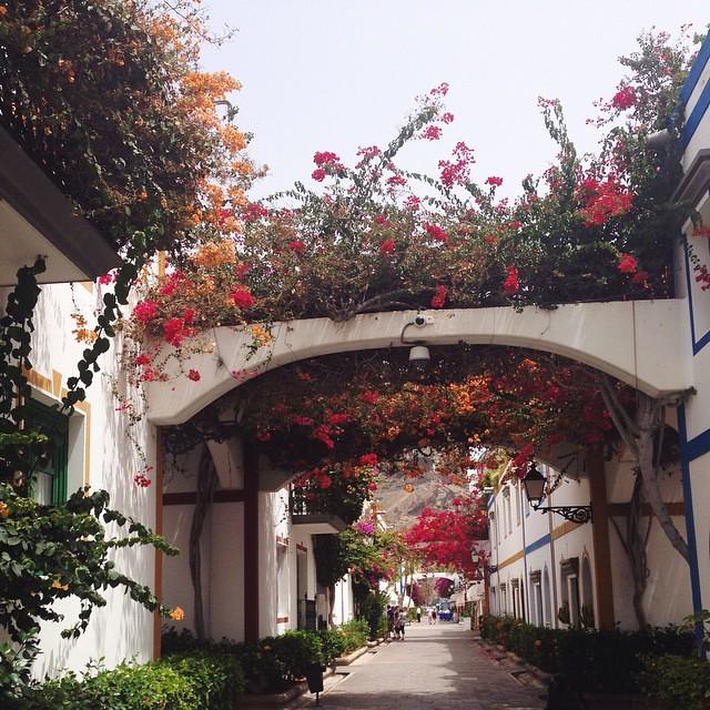 Вдохновляющая цветущая улочка, не забуду тебя ☺️