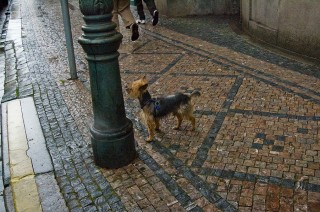 Мокрая Прага