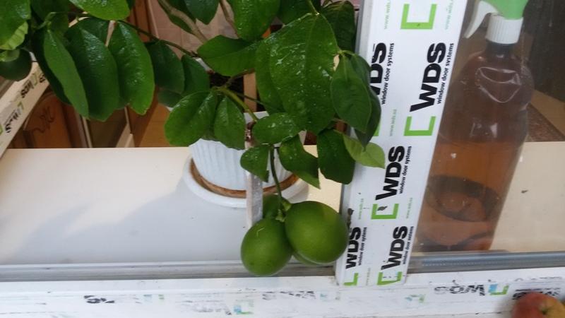 Лимоньчики 1