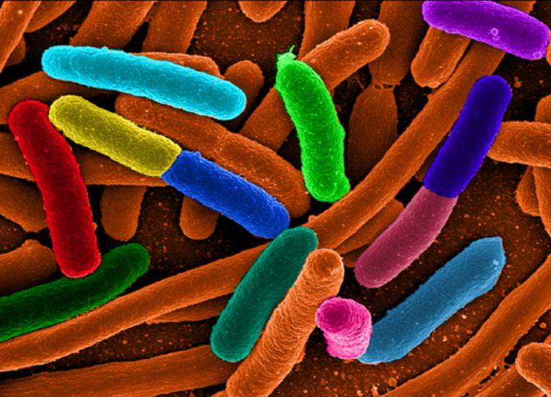От 1% до 3% веса вашего тела — это вес живущих в вас микробов, грибков и других микроорганизмов. С сайта http://bibo.kz
