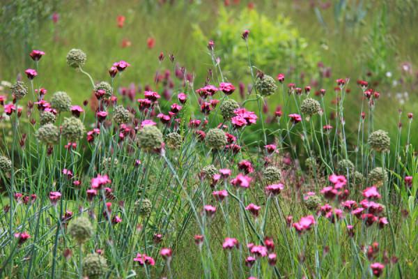 картинки : природа, растение, лужайка, прерия, Пища, весна ... | 400x600