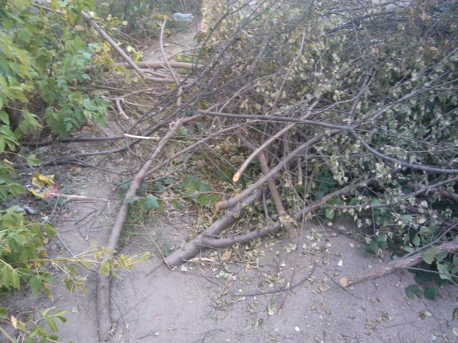 явно не случайно оказавшиеся тут деревца