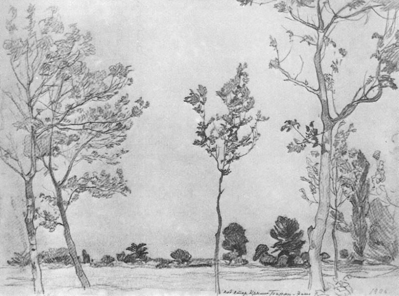 Деревья в Баран-Эли. 1906