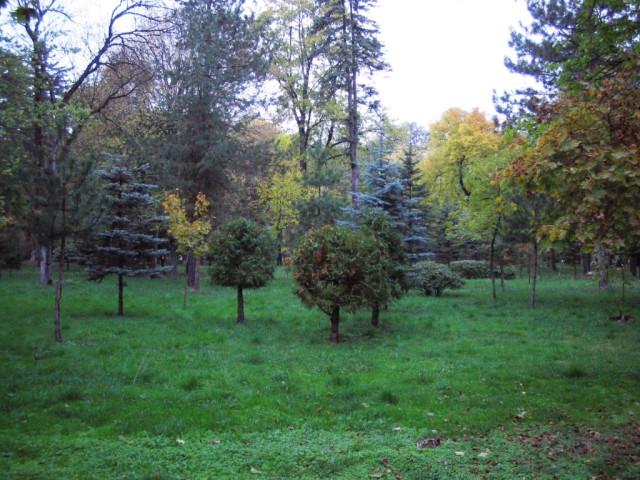 Нальчик. Парк. Атажукинский сад. Осень. Голубые ели