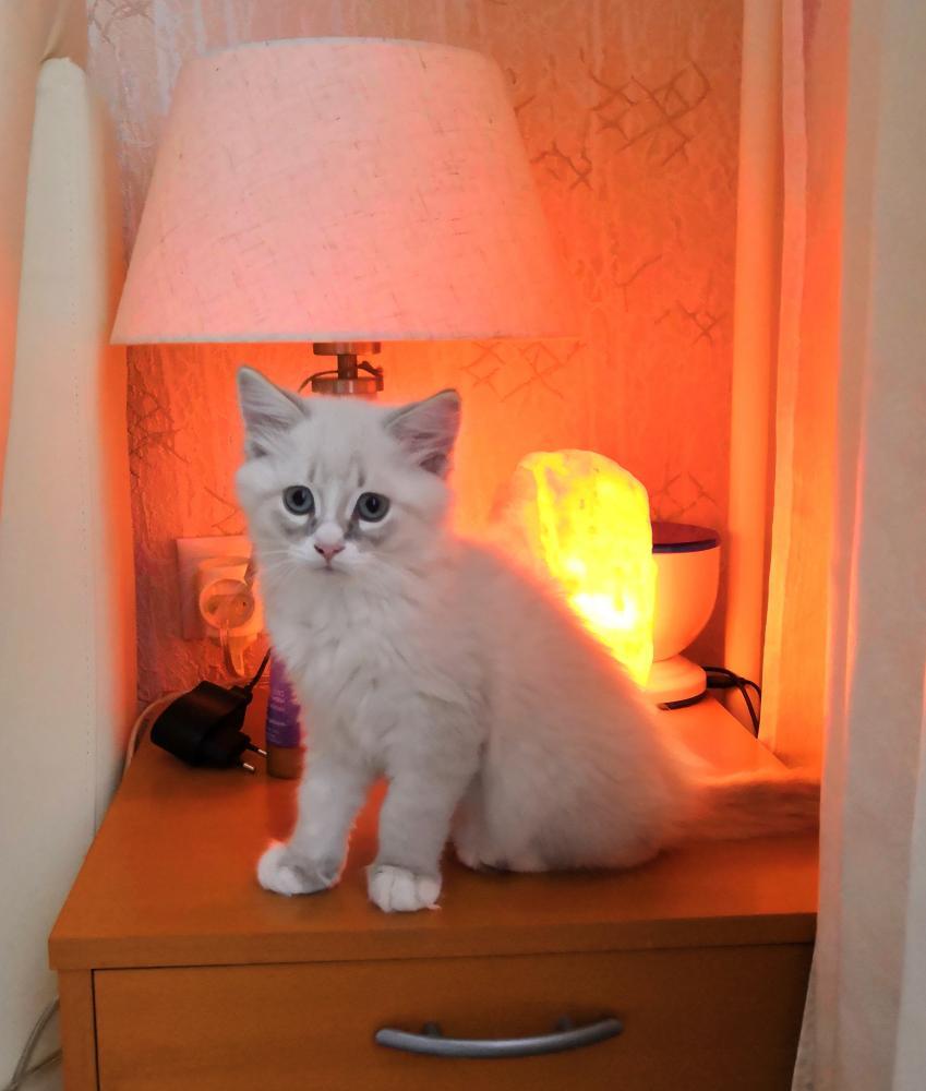 002 Кот и Лампа.jpg