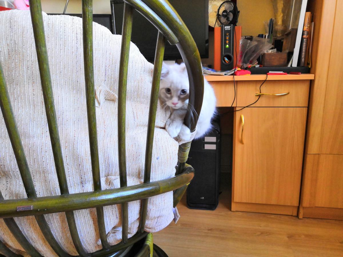 004 Кот кродётся 10.jpg