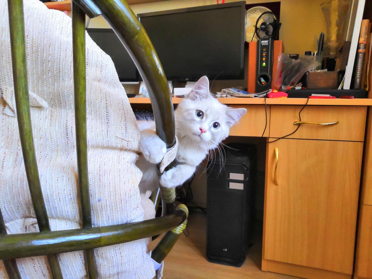 004 Кот кродётся 11.jpg