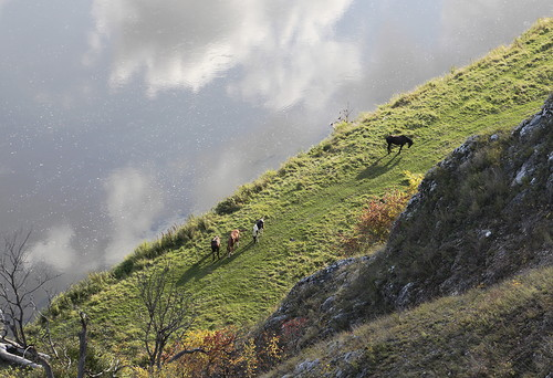 Лошади на берегу Ая