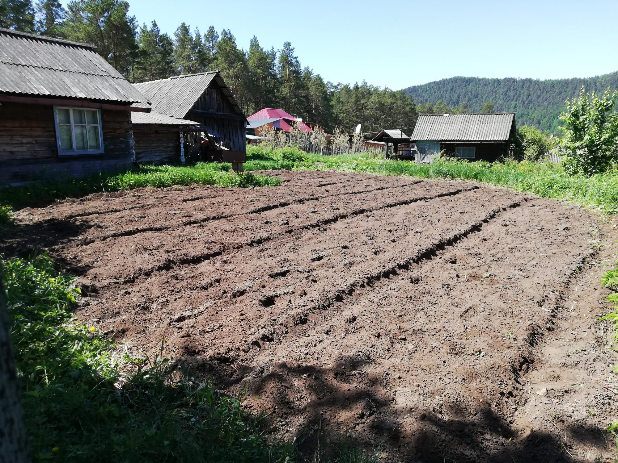 А мы с утра посадили картошку в дедушкином огороде, а потом я пилил полочку