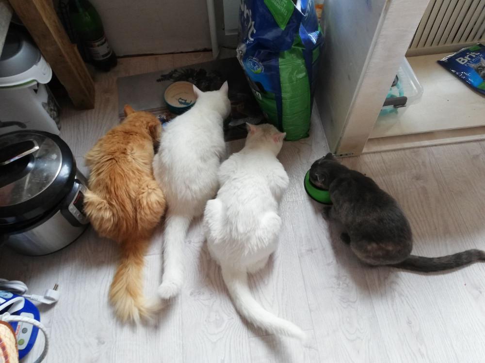 Привозили Бублика погостить, с нашими кошаками потусить