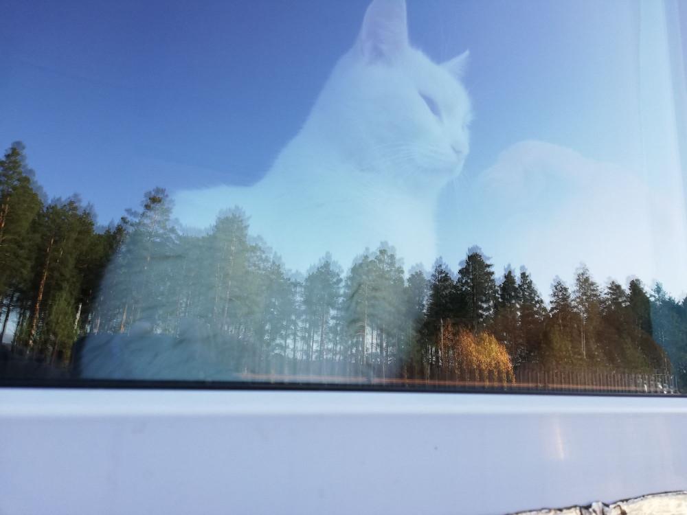Облако в форме кота