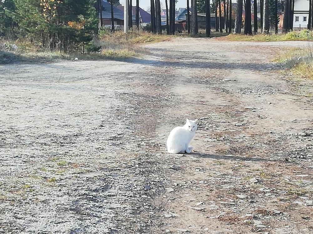 Кот стал менее контрастен, не то что на зелени раньше