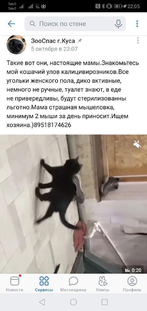 Такое уже легче, кошек спасают