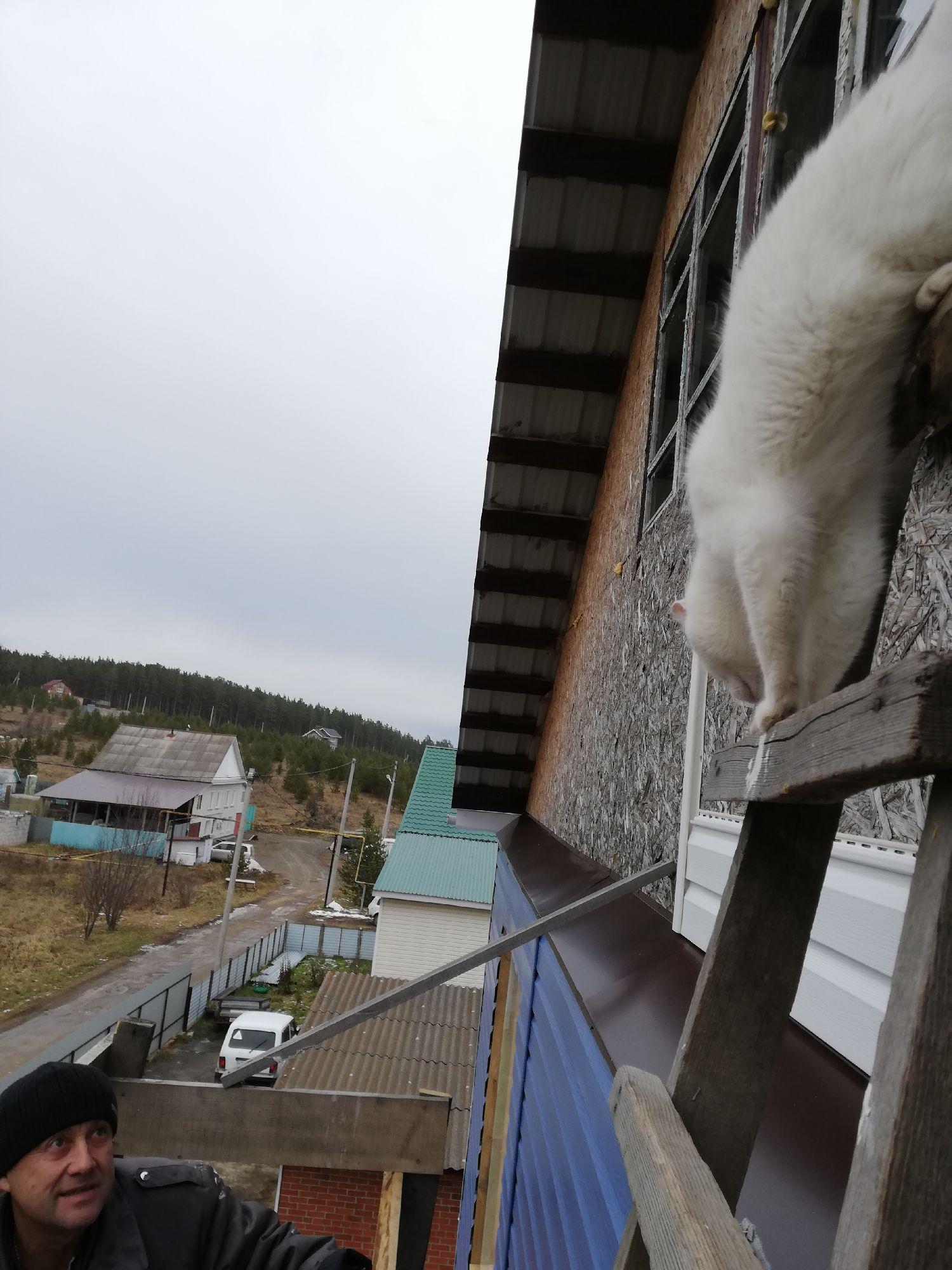 Кот залез выше всех