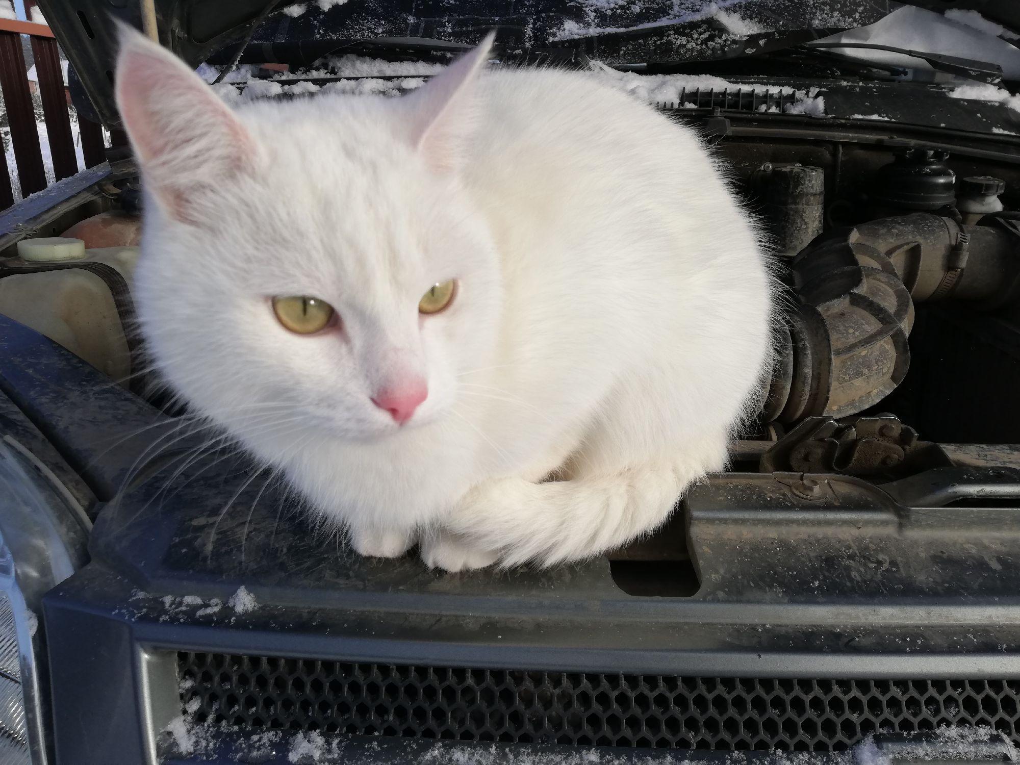 Кот вчера помогал менять аккумулятор, поддерживал своим пушистым любопытством