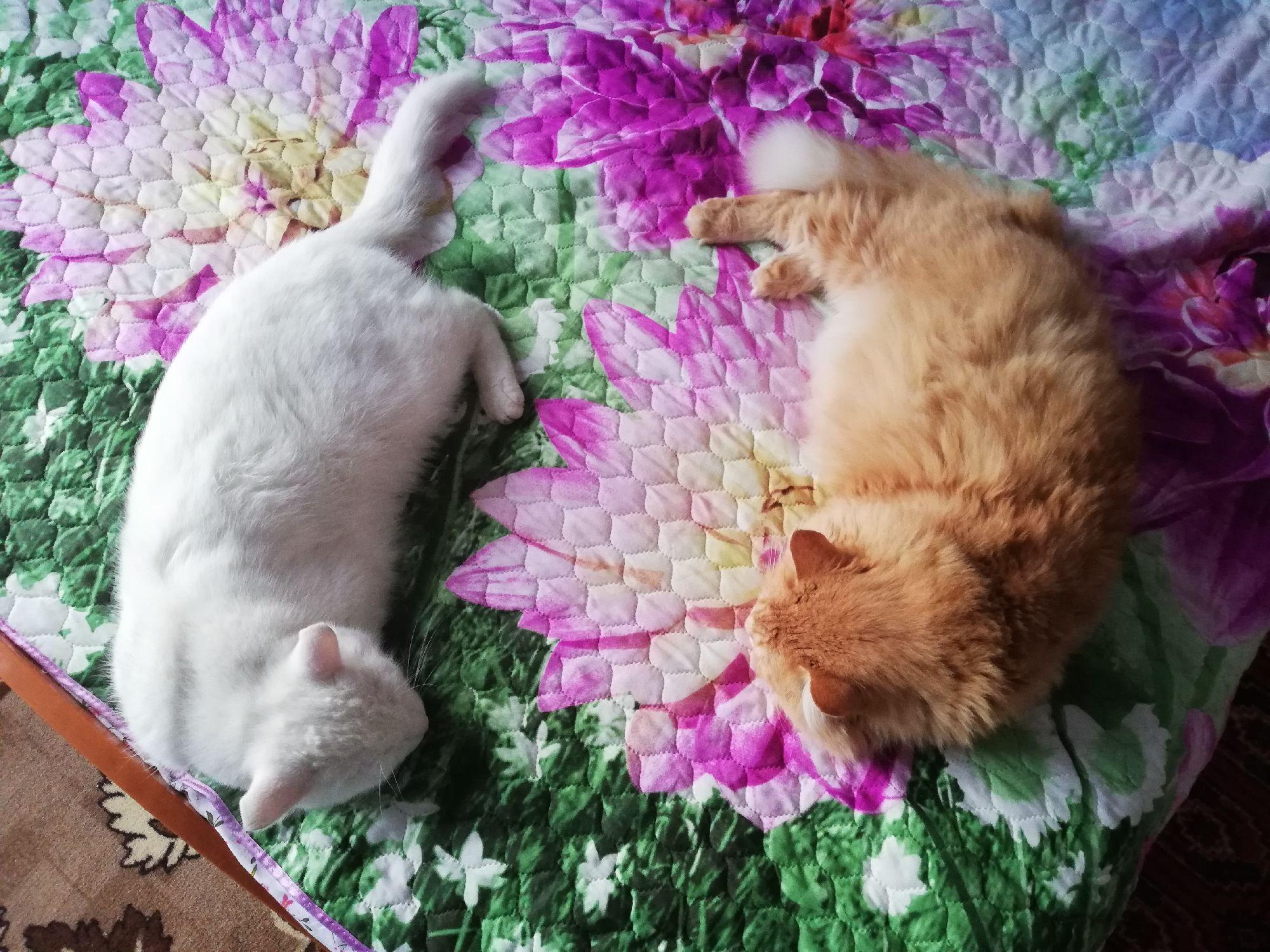 Спят усталые котятки