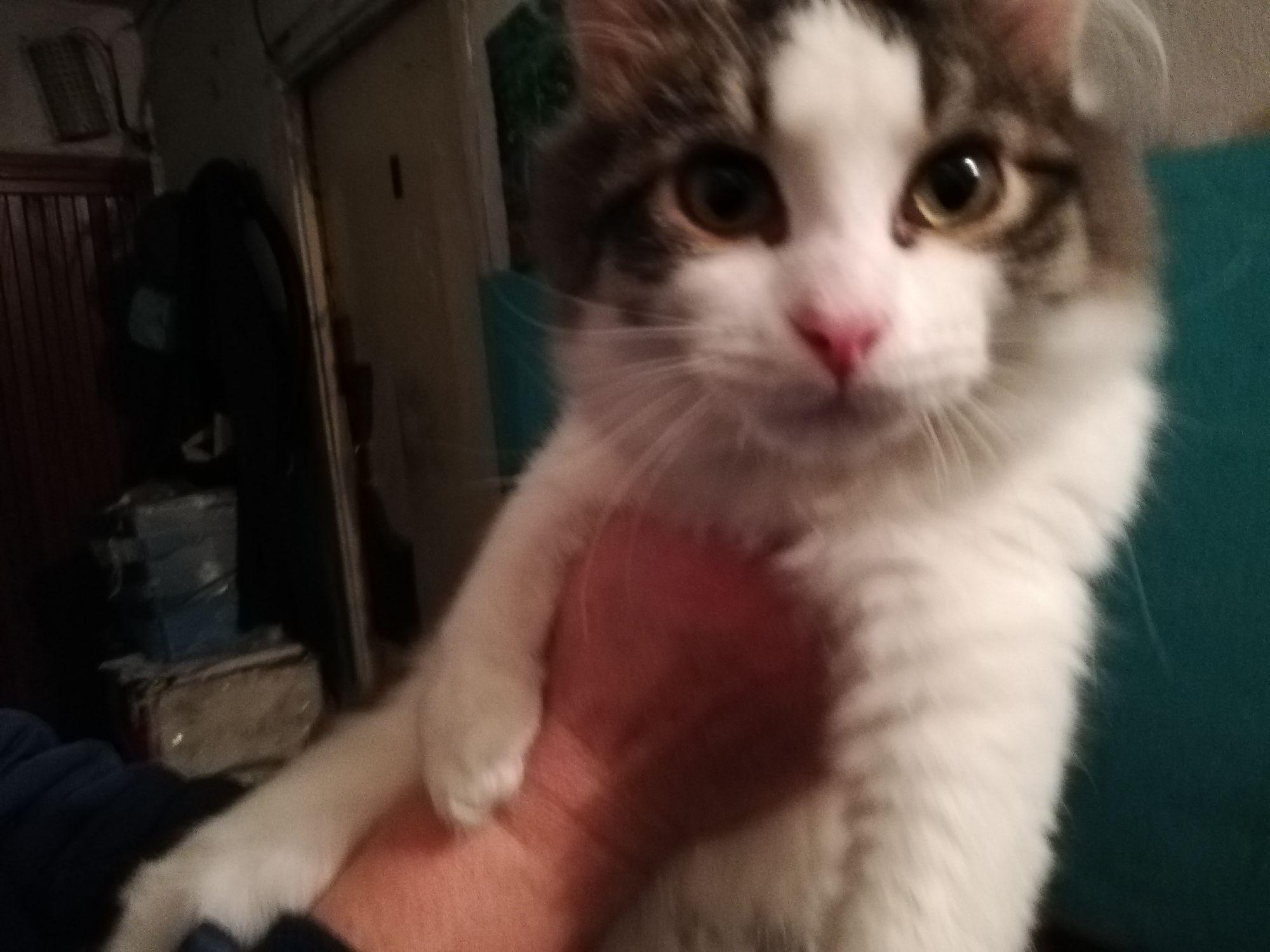Котейку подкинули в коробке вместе с его матерью кошкой и братцем, братец не дождался встречи с людьми. Котик спасён, вылечен, мать его стерилизована, пристраивается
