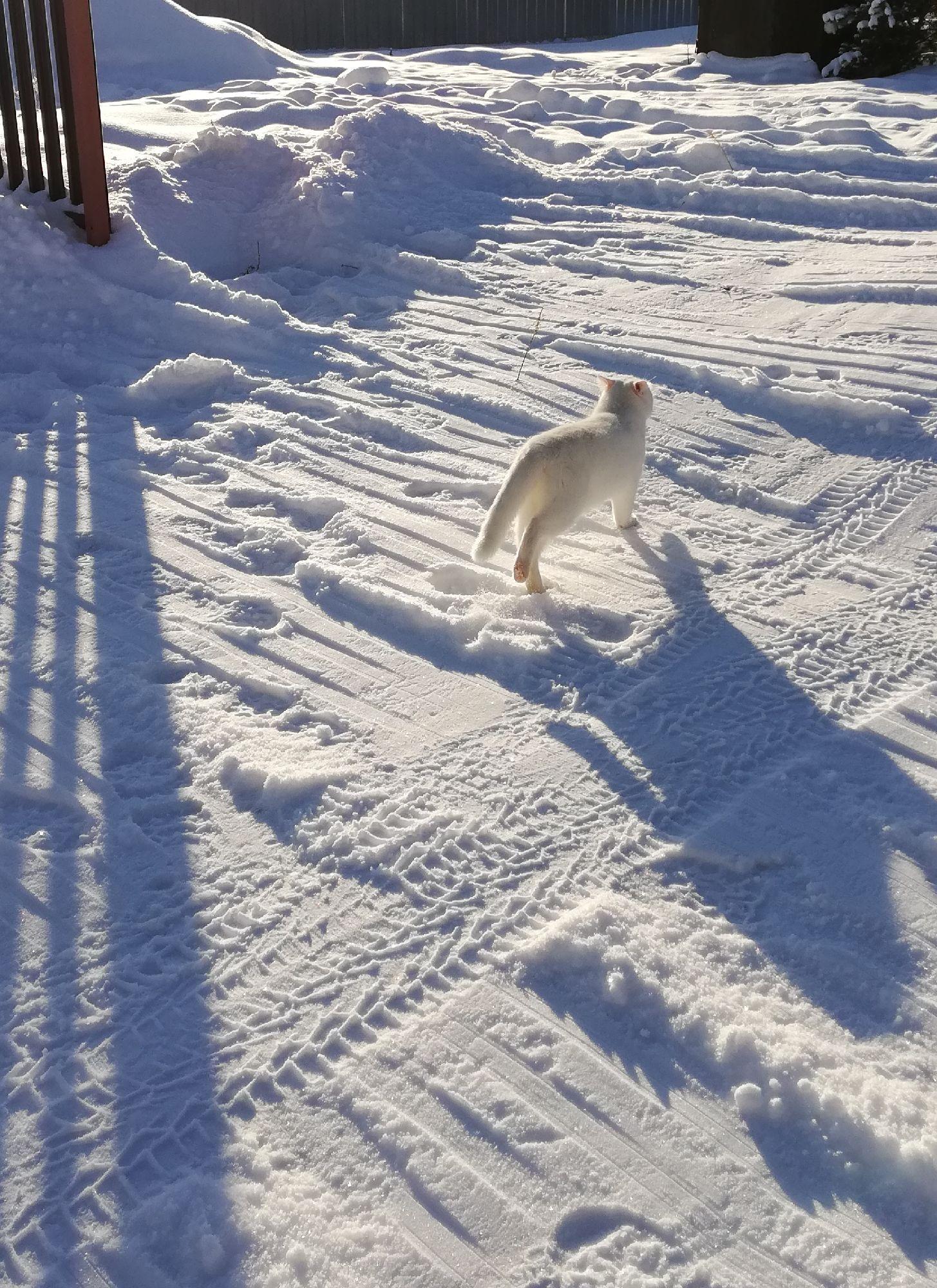 Кот сегодня ускакал гулять, когда мы уезжали. Думал вернусь через час, вышло - через шесть..) нагулялся он хорошо)