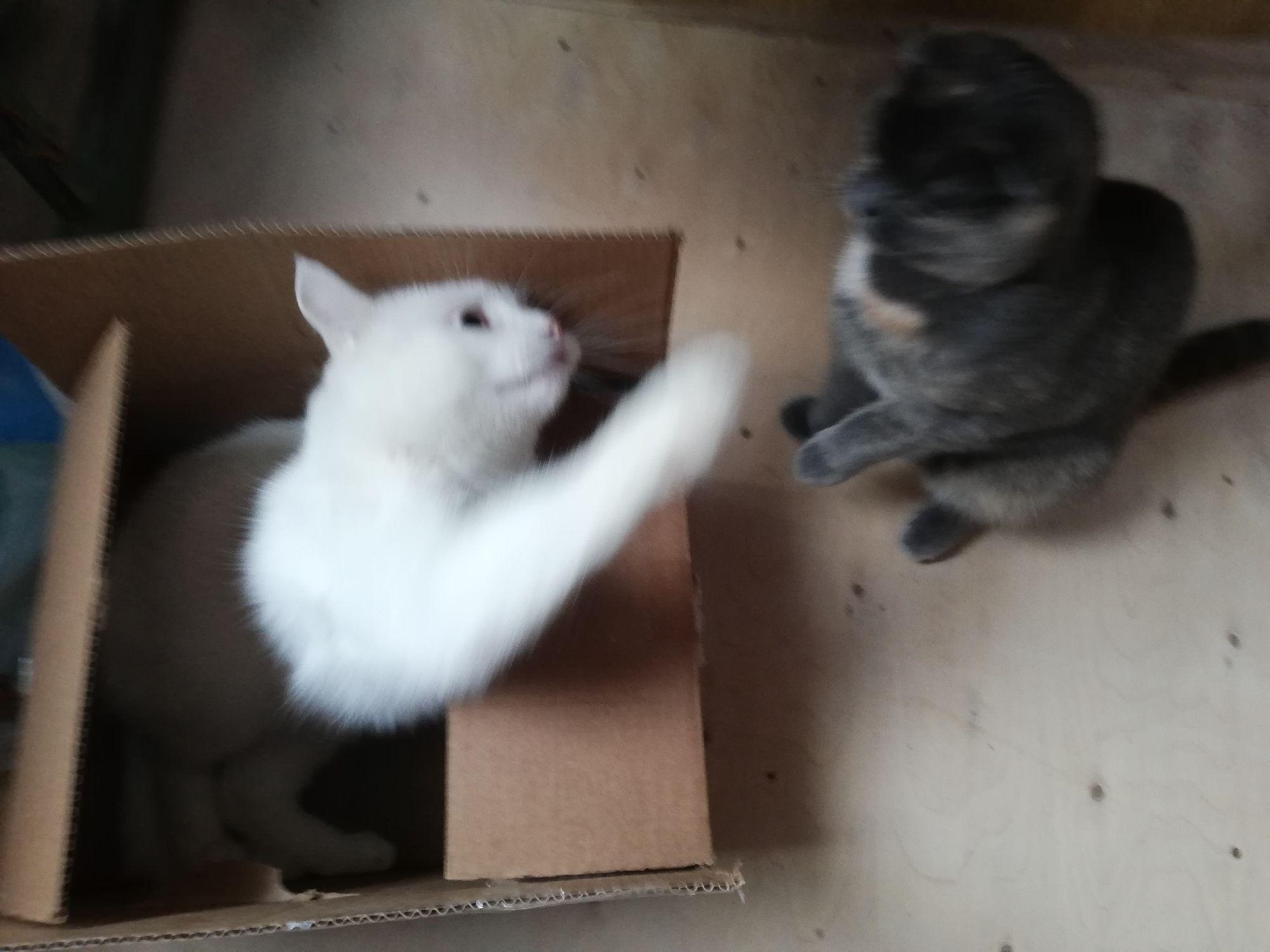 Новая коробка!