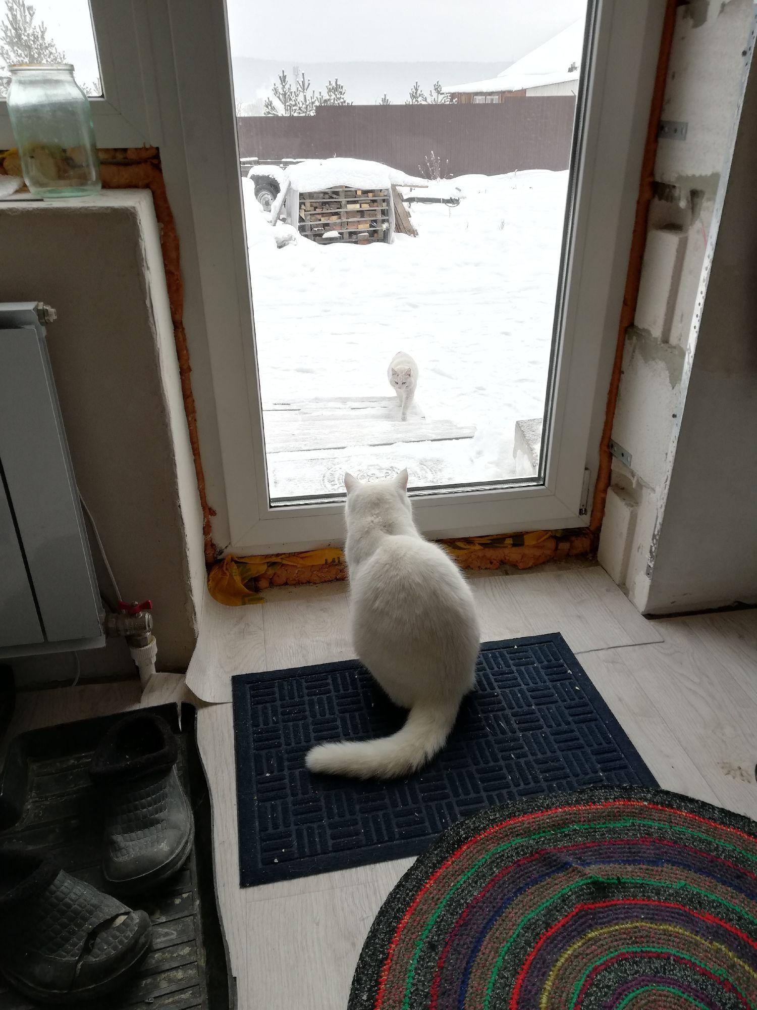 Приходил соседский кот