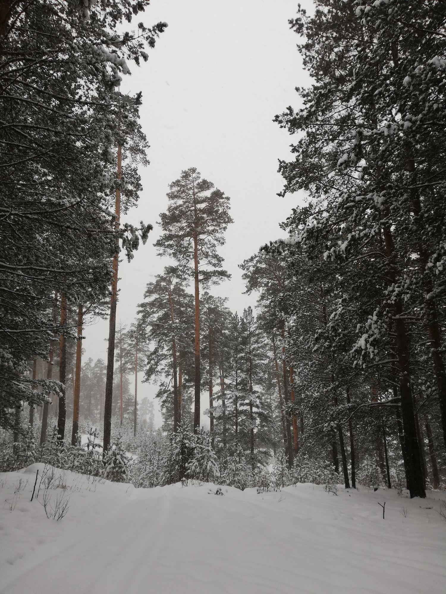 Горка, где раньше постоянно катались на лыжах
