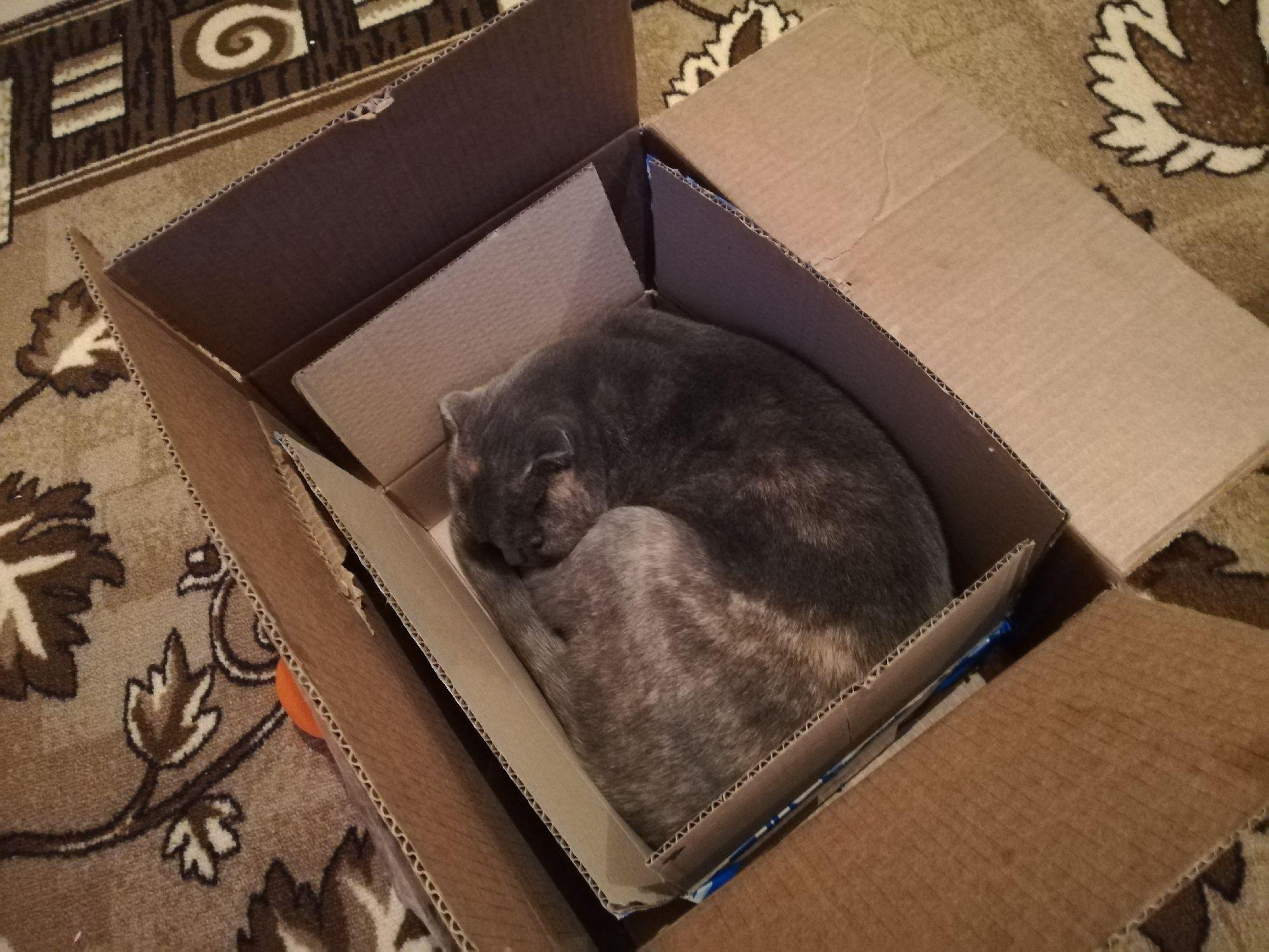 Лея в двух коробках сразу