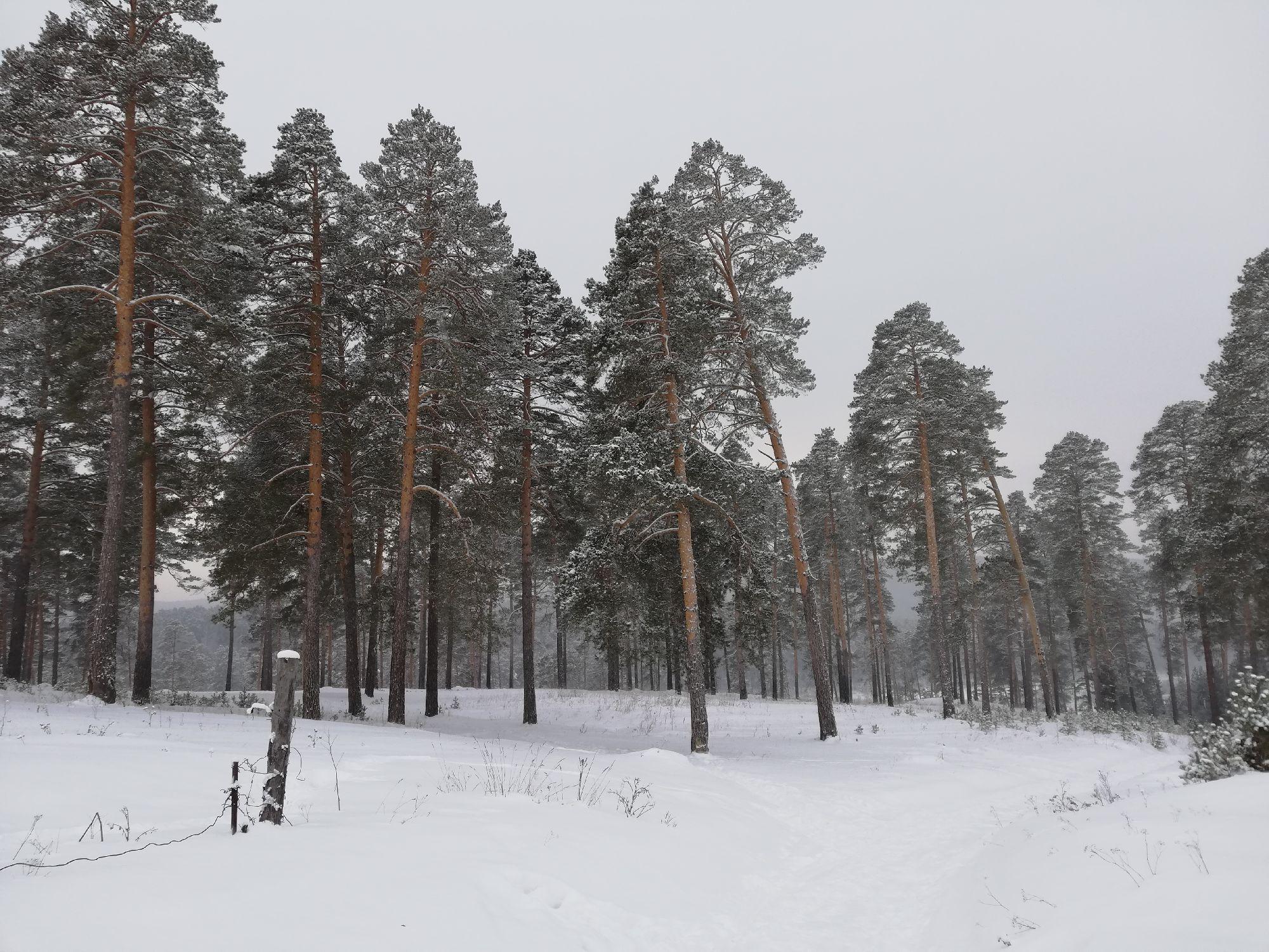 На прогулке, лес у ул. Лепёшкина