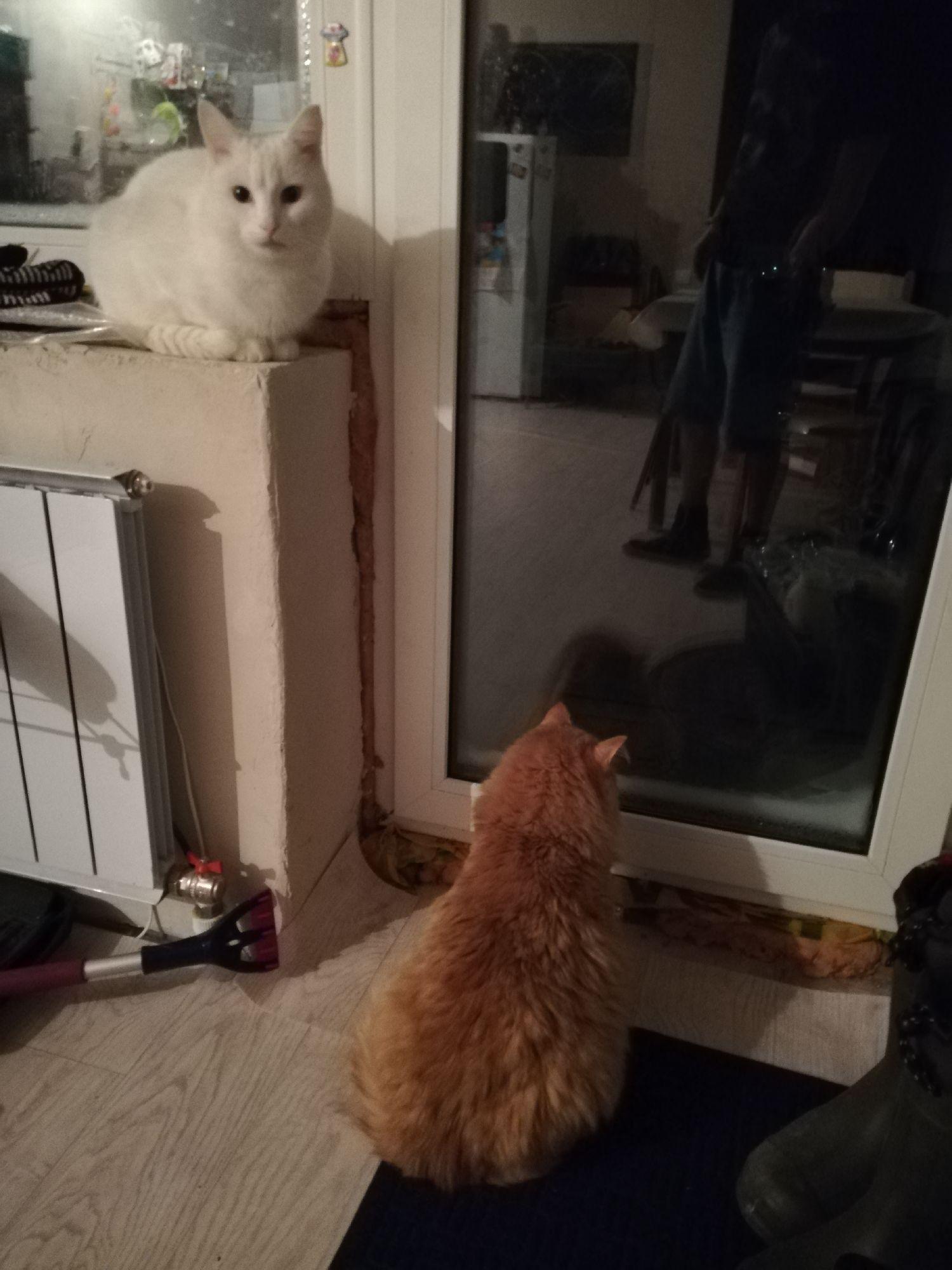 Коты и хотят, и не хотят на улицу.
