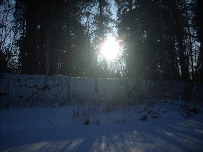 Солнышко светило сквозь лес