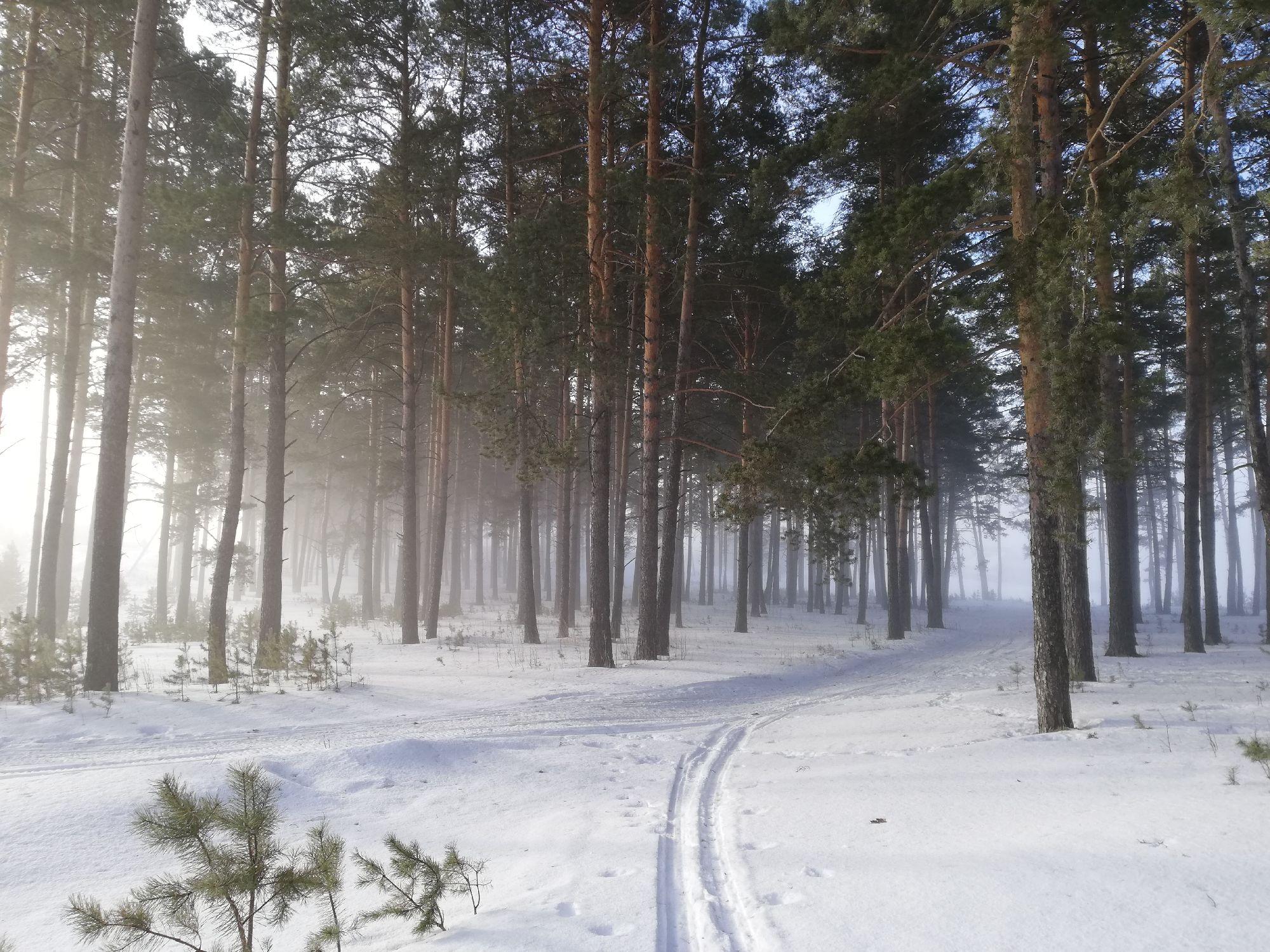 Пересечение тропы и лыжни
