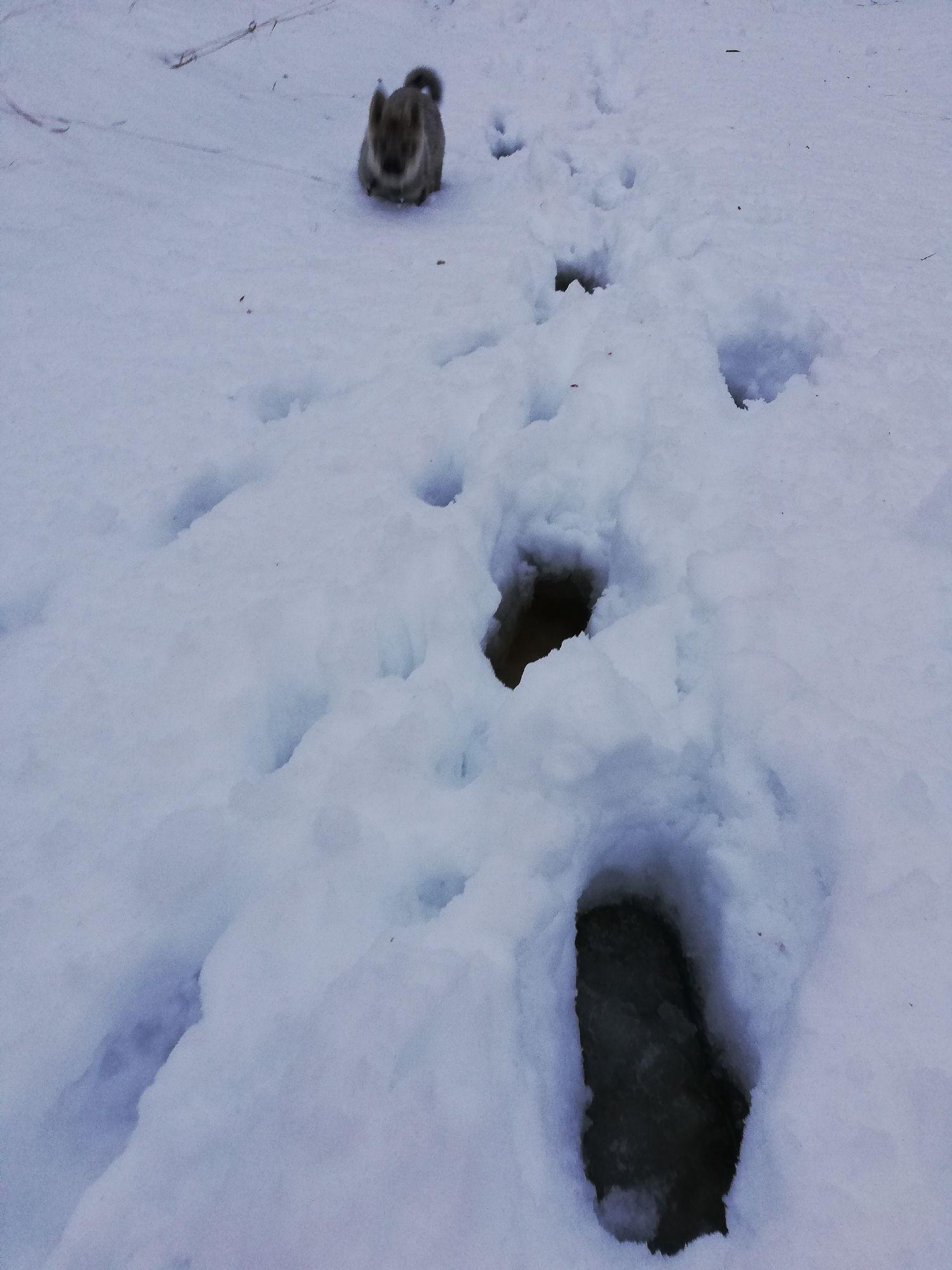Лужа под снегом