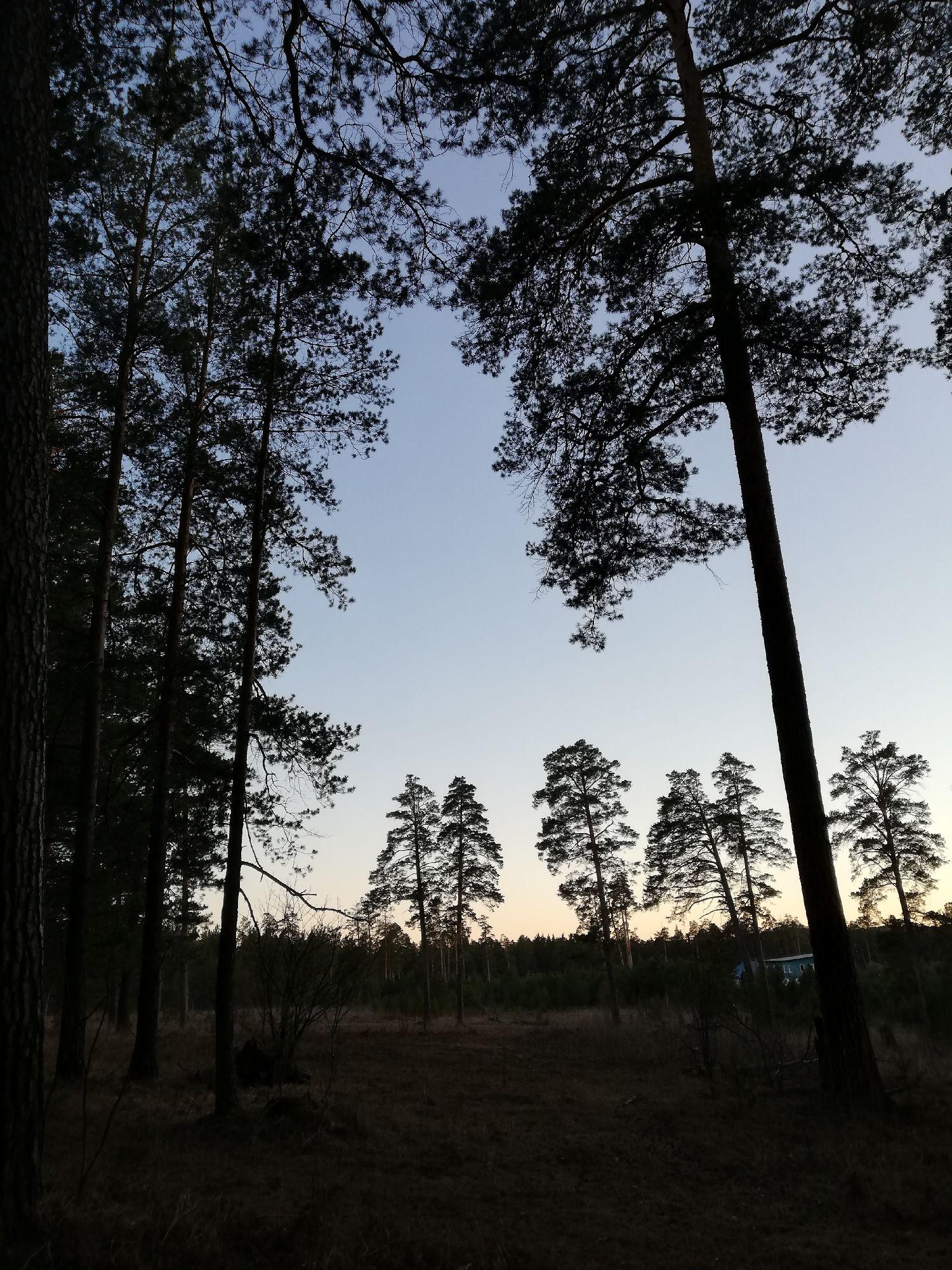 Лес у бывшего дедушкиного огорода. Дедушка каждый раз, проезжая мимо, машет рукой - привет, кормилец!