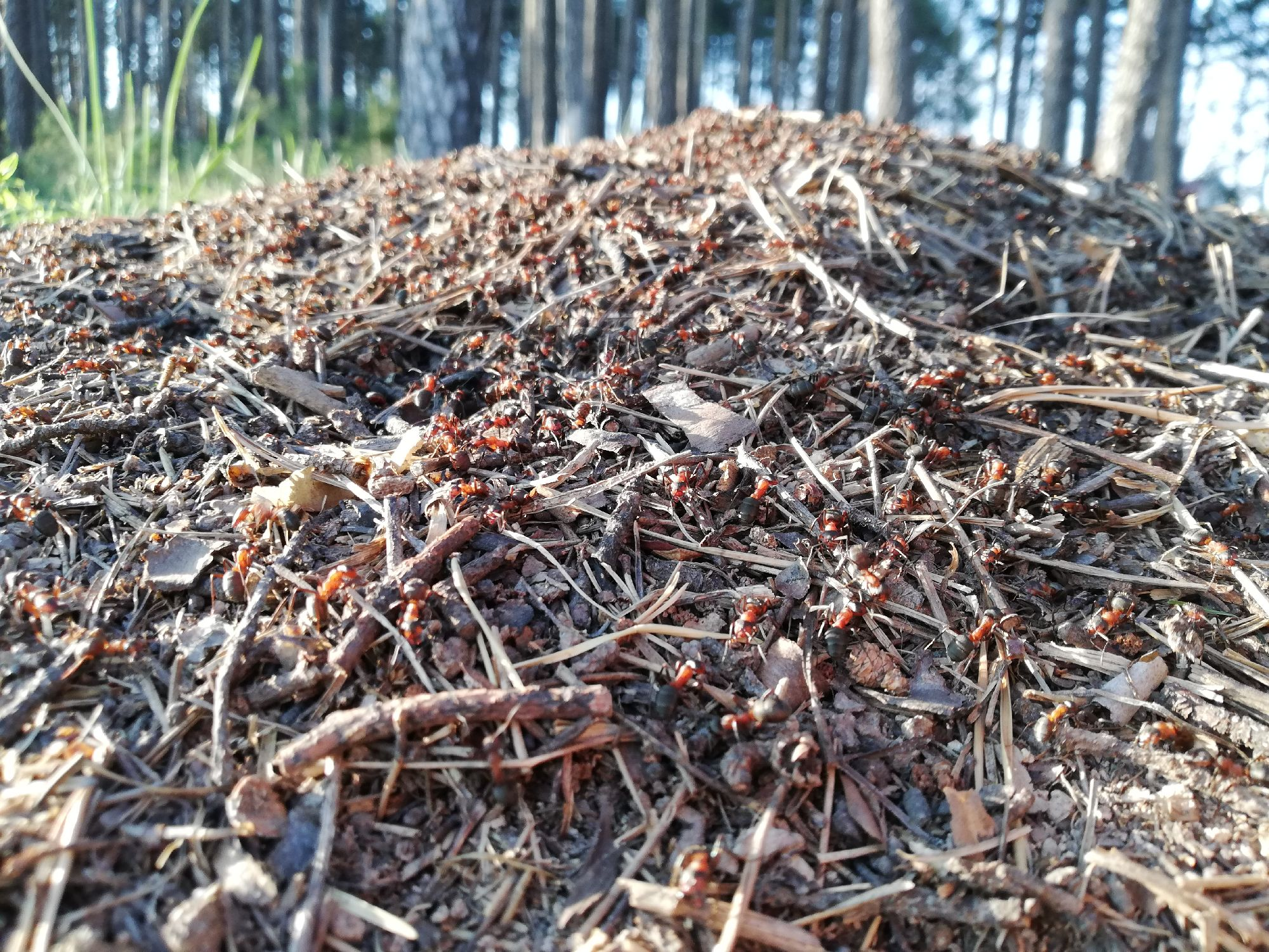 Проведали мурашей