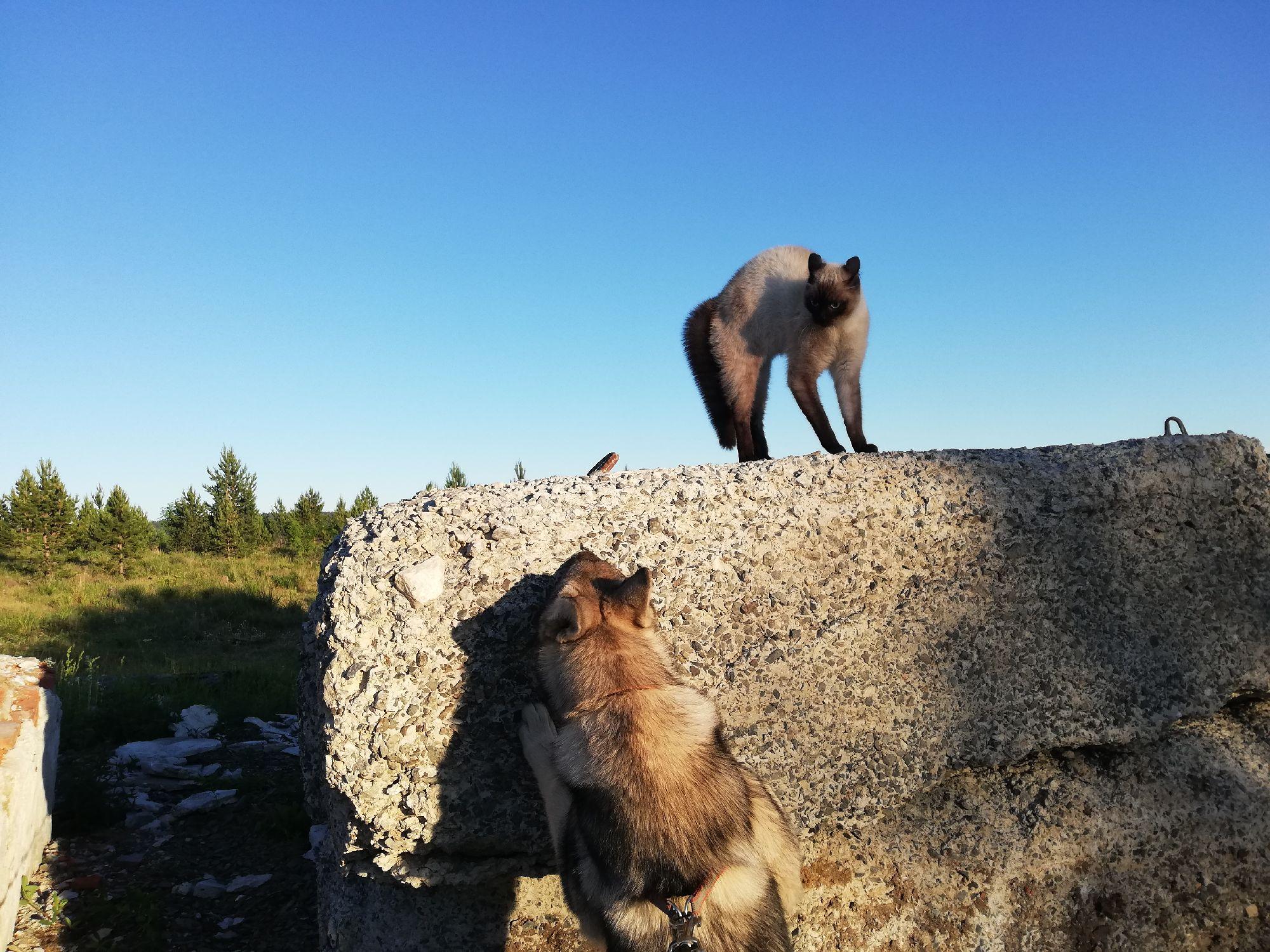 За блоком был второй дугообразный синхронный сиамский кот. Но я хотел снять кота на фоне неба)