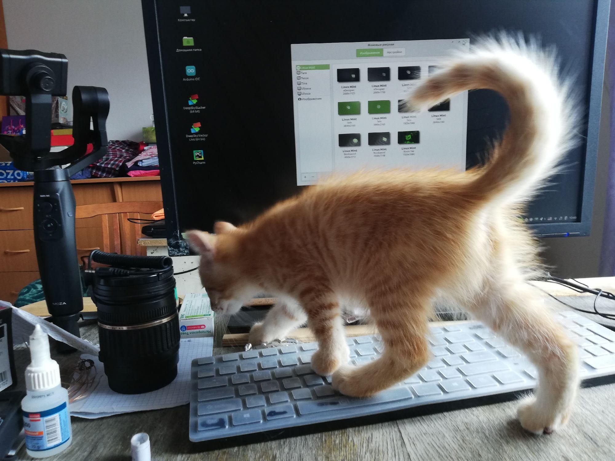 Первым делом котёнок прошёлся по ноуту, попытался сменить обои и выключил вайфай