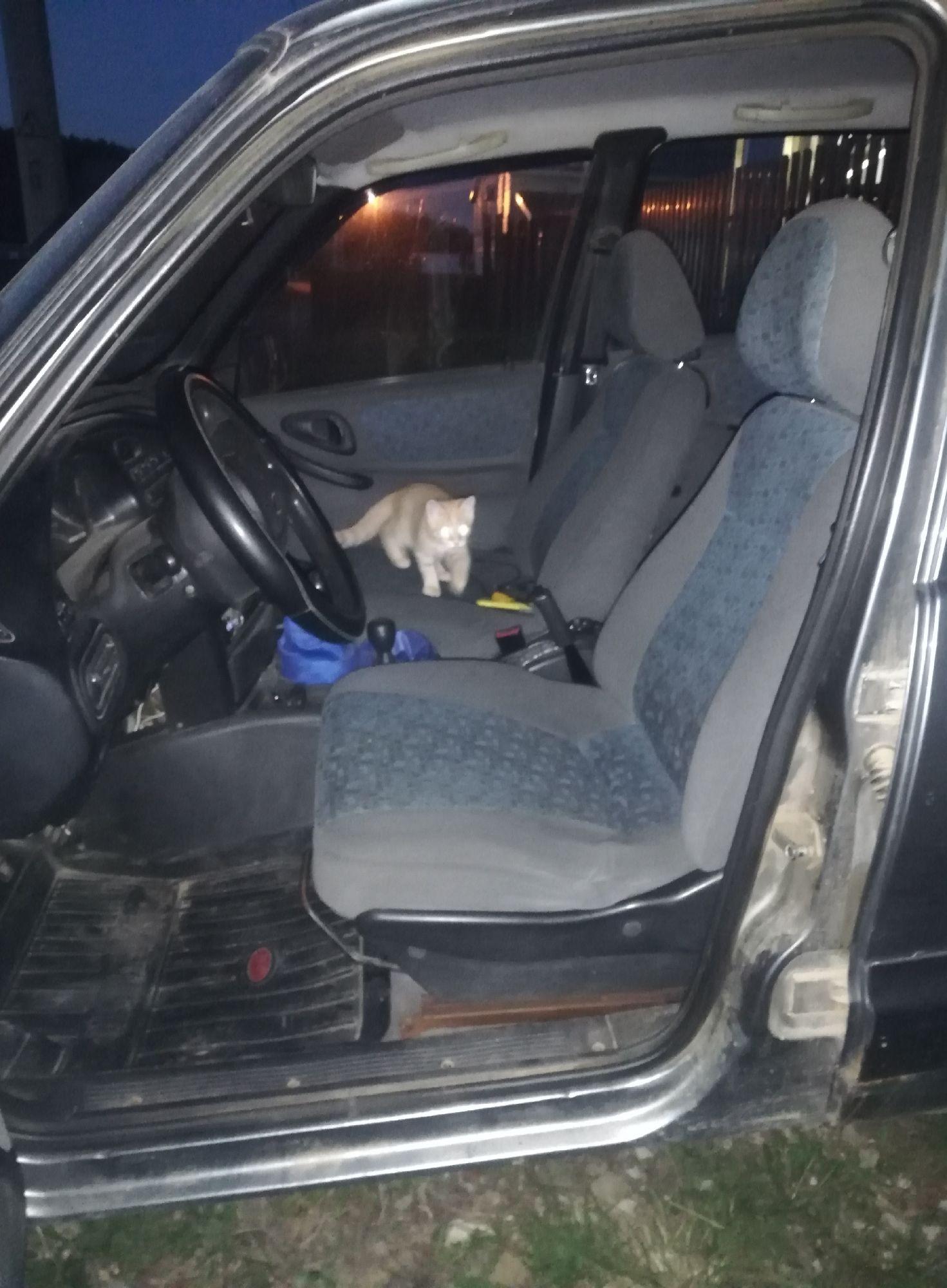 Котики обследуют машину перед выездом