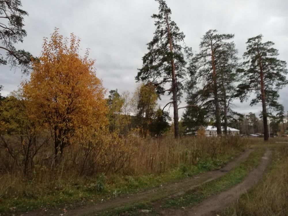 За горбольницей, дорога из леса