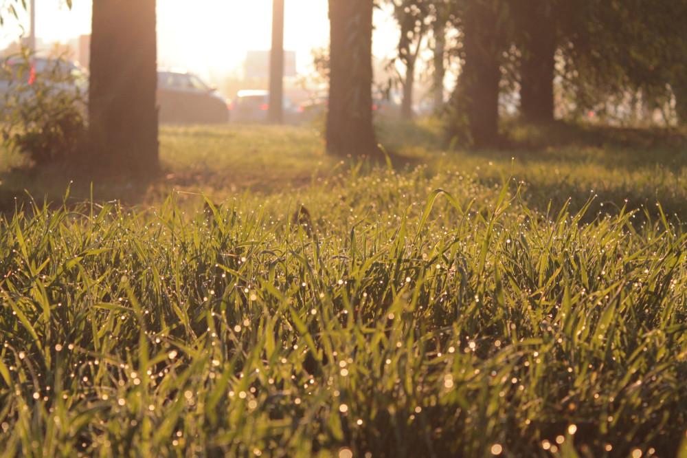 Утренняя трава
