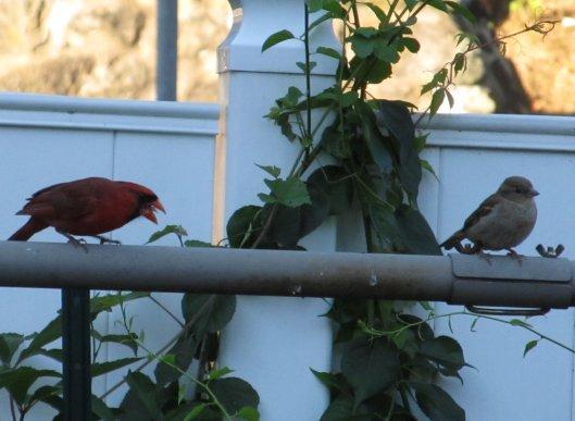 cardinalcomplaint