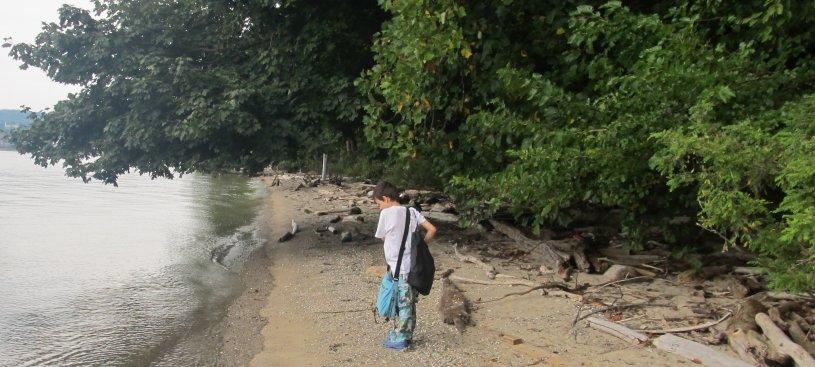 beachcombbanner
