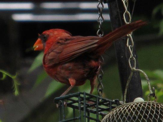cardinalonsuetblock