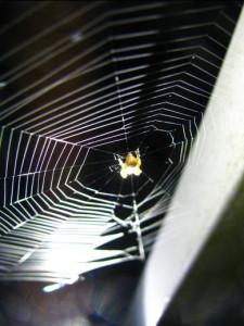 smallspiderwithweb